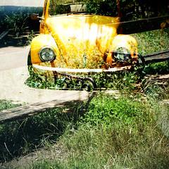 (ion-bogdan dumitrescu) Tags: romania bucharest bitzi ibdp mg3245mg3255 ibdpro wwwibdpro ionbogdandumitrescuphotography