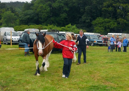 Horse at Castlewellan Show