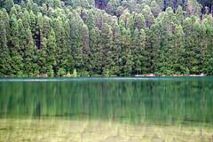 Lagoa Rasa (LPEstrela) Tags: lake green lagoon azores cryptomeria