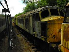 45015 Battlefield Line 21st July 2010 (Cooperail) Tags: england diesel 21 leicestershire july peak railway class 45 line battlefield 2010 d14 shackerstone 45015 locomotive1co