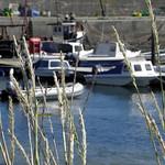 Balintore harbour thumbnail