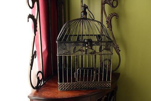 Bird cage01