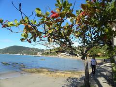 DSCN0929 (Blog do Papa-Siri III) Tags: praia sc portobelo