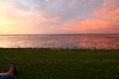 (mO0nkey) Tags: pink flowers blue light sea sky sun green nature grass fence foot evening wide dirt lucht moddergat tokinaaf1650mmf28