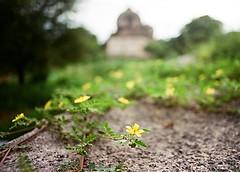 Blurring the buried (Lazybug) Tags: india analog bokeh wideangle hyderabad nikonf60 qutubshahitombs sigma24mmf28 kodakultramax400 lazybug hyderabadphotographyclub akhiltandulwadikar