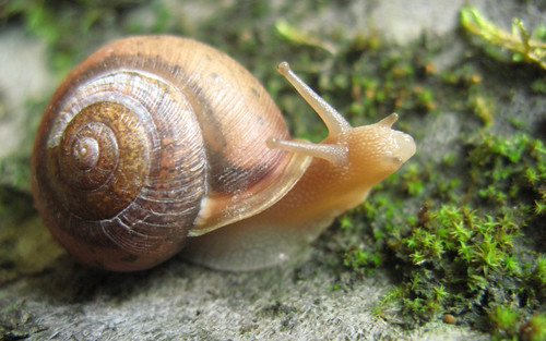 Gastropod1 by DaveHuth, on Flickr