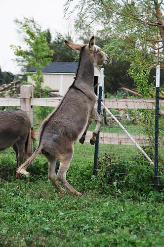 05_donkey_hop