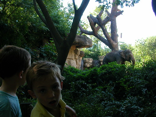 July 31 2010 Zoo (2)