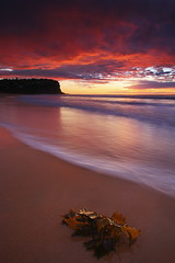 South Bungan Seaweed (Tim Donnelly (TimboDon)) Tags: seascape canon australia nsw waterscape cokin bungan oceansunrise