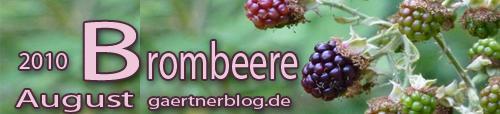 Garten-Koch-Event August 2010: Brombeere - Teilnahme bis 31.08.2010
