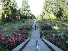 Rose Garden Vista in Washington Park