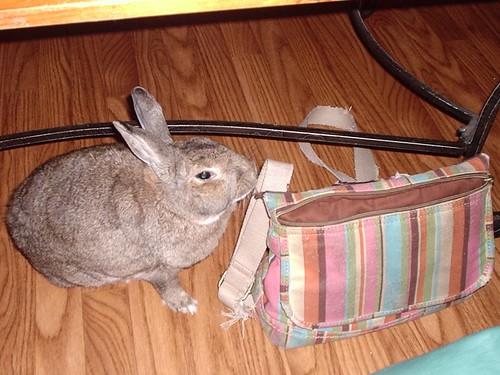 Bunny Foo-Foo eats my purse