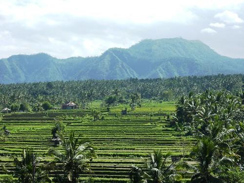 Bali-Tirtagangga (50)
