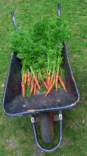 Carrots in Soho square