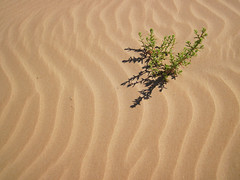 **EXPLORED** Sand patterns - Solchi di sabbia (Robyn Hooz (away)) Tags: camera italy grass canon sand italia pattern dune powershot explore erba sicily disegni sicilia compact sabbia d10 explored