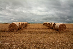 Bales - Ditchling Beacon (monkeymillions) Tags: