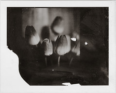 (angex) Tags: bw film polaroid hasselblad 667 panpola