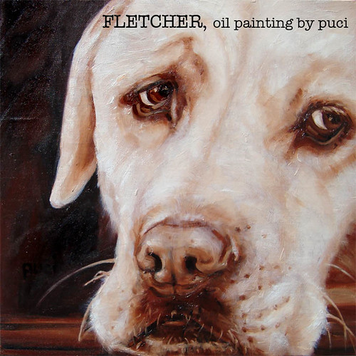 yellow Labrador Retriever - Fletcher
