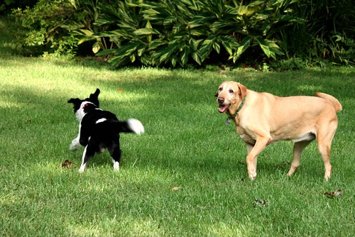 Dog Play Date 2