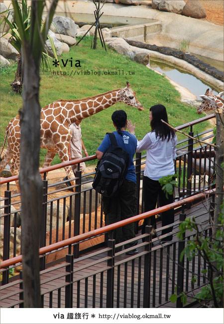 【新竹住宿】來去和動物住一晚~關西六福莊生態渡假旅館23