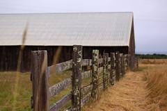 Mendocino/Westport Camping (47project) Tags: camping wine vineyards mendocino koa