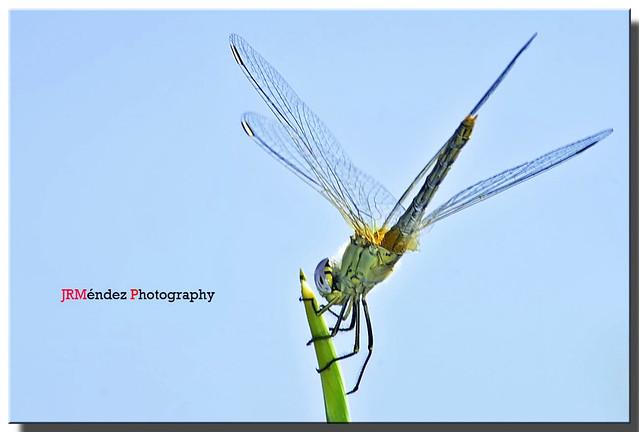 Tiempo de libélulas ....