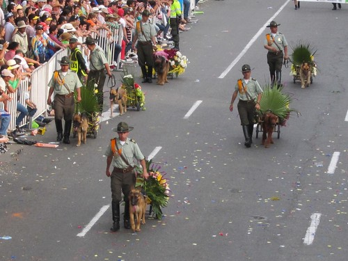 Even the dogs got into the act, pulling little wheeled carts with miniature silettas.