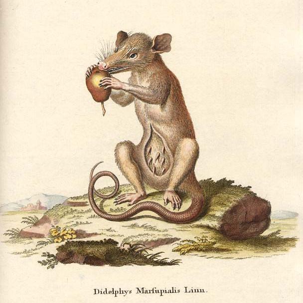 мышь 4