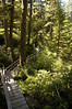 Moving into the Forest Below (mgier photography) Tags: old trees summer green rainforest vancouverisland boardwalk lush canopy majestic 2010 pacificrimnationalpark creaking