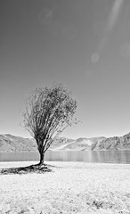lone (spo0nman) Tags: travel sky blackandwhite india tree love day leh jk laddakh pangonglake