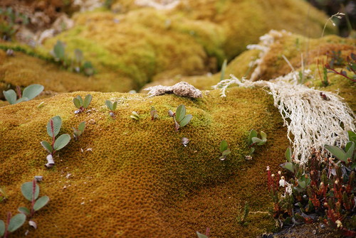 Walking on Sphagnum Moss