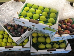 #230 - Many dozen fresh figs
