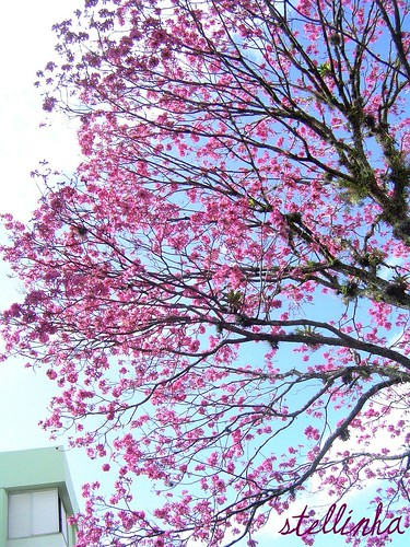 Quinta-flor (de fora)