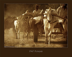 1947 Punjab (Harvarinder Singh) Tags: travel india rural ancient village 50s caravan punjab partition 1947 ludhiana villagelife indiapakistan jagraon ruralpunjab harvarindersinghphotography harvarindersingh manooke