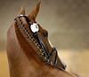 Belissa (claustral) Tags: portrait horse bokeh i500 interestingness361 belissa thegalleryoffinephotography tegger fölvisning belonat hässleberga explore20100826