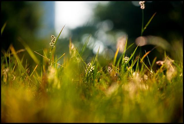 grasscape