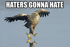 Lol. Nuff' Said. (THEBrickTrooper) Tags: eagle lol hate said gonna nuff haters