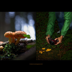 PoV tutorial ;-)) (stella-mia) Tags: mushroom lumix dof pov panasonic pancake 20mm tutorial gf1 dmcgf1 panasoniclumixdmcgf1