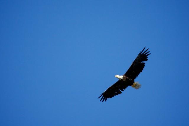 Alaska Images 37