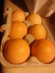 6 brown eggs
