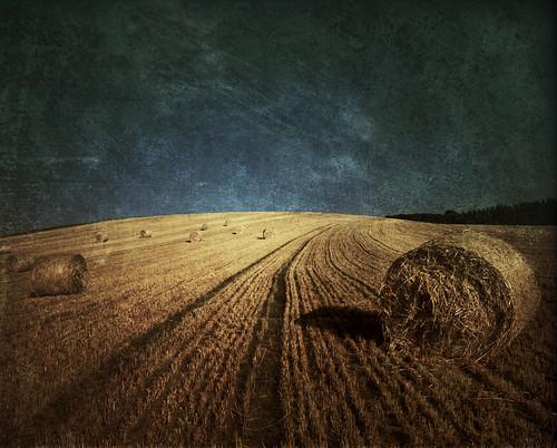 フリー写真素材, 自然・風景, 田畑・農場, 干し草,