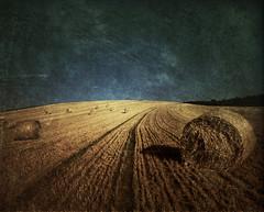 [フリー画像] 自然・風景, 田畑・農場, 干し草, 201008290700