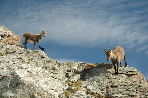 Zermatt-Matterhorn-Day 6 038