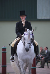 arab horse:  16/1 hands ridden 8 year old gelding (pg tips2) Tags: show summer horses horse international arab ponies arabian aug 2010 equus arabs arabians equines towerlands arabhorse arabhorses ukiahs ukinternationalarabhorsesociety2010