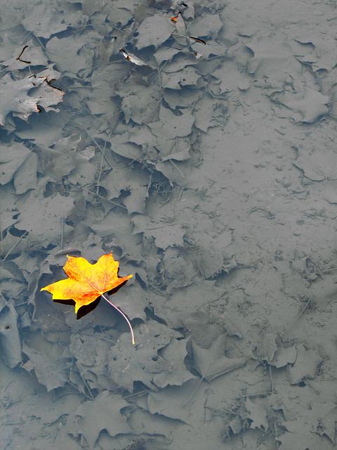 Last Dead Leaf