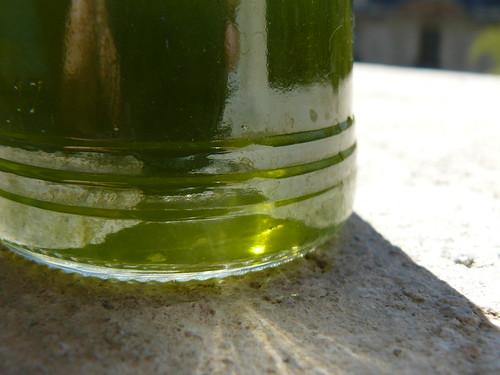foeniculum vulgare (wild fennel) dye bath