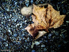 Adeus OUTONO. - amo essa foto (: (Nay Hoffmann) Tags: folha seca outono pedras adeus