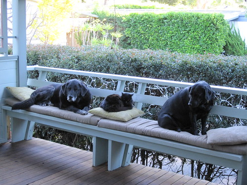 three black pets