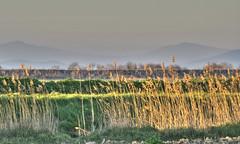 Paesaggio della Maremma - Landscape of Maremma (Tuscany, Italy) (ricsen) Tags: park italien parque italy parco naturaleza verde green nature landscape countryside europa europe italia natural natura paisaje campagna tuscany campo toscana toscane grosseto hdr italie paesaggio toskana maremma naturale alberese ricsen maremme