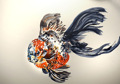 Goldfish Face (Gem  Salsberg) Tags: face painting goldfish watercolour creativethinking animalcreatures beautifulfish limitlesspotential gemsalsbergimages